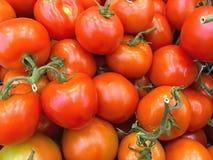 Primo piano rosso maturo del peperoncino rosso dei pomodori Immagine Stock Libera da Diritti