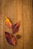 Primo piano rustico dei fogli di caduta e del baccello del seme su legno Immagine Stock Libera da Diritti