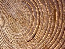 Primo piano sparato degli albero-anelli Fotografia Stock Libera da Diritti
