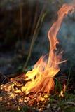 Primo piano su fuoco Nel parco della città che brucia erba asciutta immagini stock