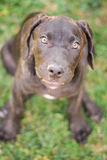 Primo piano su un profilo di un cucciolo Immagini Stock Libere da Diritti
