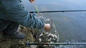 Primo piano su una gabbia dei pesci fresco-presi, pesci di lancio del pescatore dentro video d archivio