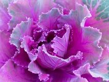 Primo piano succulente/macro Fotografia Stock Libera da Diritti