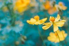Primo piano sul fiore giallo fiorito fotografie stock libere da diritti