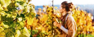 Primo piano sul ramo dell'uva e giovane donna nella vigna di autunno in sedere Fotografia Stock