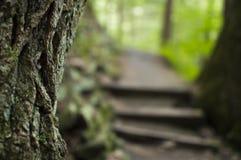 Primo piano sull'albero con il sentiero nel bosco e le scale nei precedenti Fotografia Stock