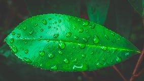 Primo piano sulle gocce di acqua sulla foglia verde Immagini Stock Libere da Diritti