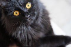 Primo piano sveglio affettuoso del gatto nero immagine stock libera da diritti