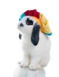 Primo piano sveglio del coniglio di pasqua isolato su un bianco Fotografia Stock
