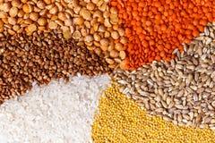 Primo piano torto dei cereali Fotografia Stock