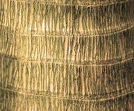 Primo piano tropicale dell'albero di Plam Immagine Stock Libera da Diritti