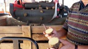 Primo piano un uomo taglia una patata e mostra la sua qualità patate annuali che raccolgono periodo sull'azienda agricola patate  video d archivio