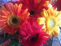 Primo piano variopinto dei fiori Immagini Stock Libere da Diritti