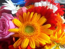 Primo piano variopinto dei fiori Fotografie Stock