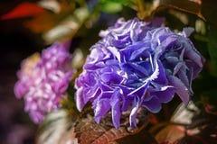 Primo piano variopinto dei fiori fotografia stock
