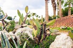 Primo piano verde del cactus Immagini Stock