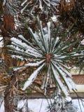 Primo piano verde del ramo di albero con neve bianca fotografia stock