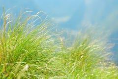Primo piano verde dell'erba della montagna. fotografia stock libera da diritti