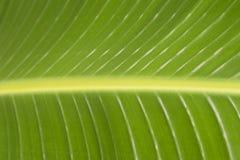 Primo piano verde della foglia, struttura, fondo fotografia stock