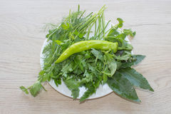 Primo piano verde fresco dell'ingrediente dell'erba Fotografie Stock Libere da Diritti