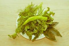 Primo piano verde fresco dell'ingrediente dell'erba Immagine Stock Libera da Diritti