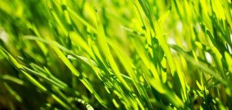 Primo piano verde intenso dell'erba Fotografie Stock Libere da Diritti