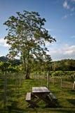 Primo Posto, granja en Tailandia Imagen de archivo libre de regalías