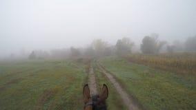 Primo punto di vista della persona di montare un cavallo Punto di vista del cavaliere che cammina allo stallone alla natura Moto  Fotografie Stock Libere da Diritti