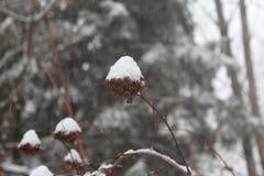 Primo ramo della neve Fotografie Stock