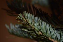 Primo ramoscello del Natale fotografie stock