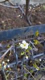 Primo segno della sorgente Un piccolo fiore del fiore immagini stock