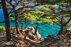 primoryerussia seashore Royaltyfri Fotografi