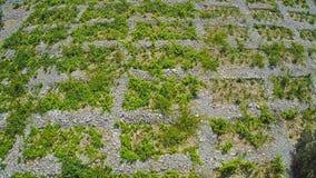 Primosten Vineyards, aerial shot stock video footage