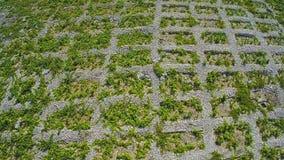 Primosten Vineyards, aerial shot stock footage