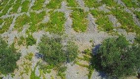 Primosten Vineyards, drystone walls stock video footage