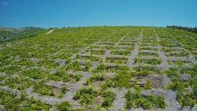 Primosten Vineyards, drystone walls stock footage