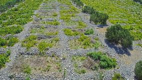 Primosten Vineyards flyover stock video footage
