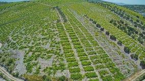 Primosten Vineyards, UNESCO World Heritage site stock footage