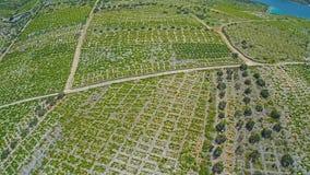Primosten Vineyards, UNESCO World Heritage site stock video footage