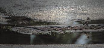 Primping i pölen Royaltyfria Bilder