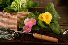 Free Primrose And Garden Utensil Royalty Free Stock Photo - 18266585