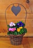 Primrose basket spring Easter Stock Images