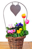 Primrose basket spring  heart Royalty Free Stock Photo