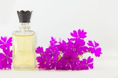 Primrose essential oil in  beautiful bottle on table. Primrose essential oil in a beautiful bottle on the table Stock Photography