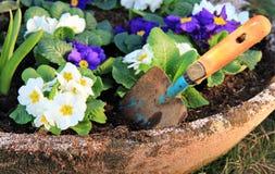 Primrose flower and little shovel royalty free stock photos