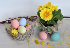 Primrose flowers with Easter eggs Stock Photo