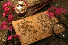 Primrose flowers with herbal candles and diary with drawings of magic plants on planks