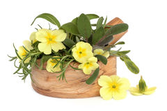 Primrose Flowers and Herbs Stock Photography