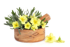 Primrose Flowers and Lavender Herb Leaves. In an olive wood mortar with pestle, over white background royalty free stock image