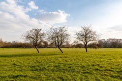 Primrose Hill Park. Early spring, leafless trees in Primrose Hill Park in London England UK stock photo